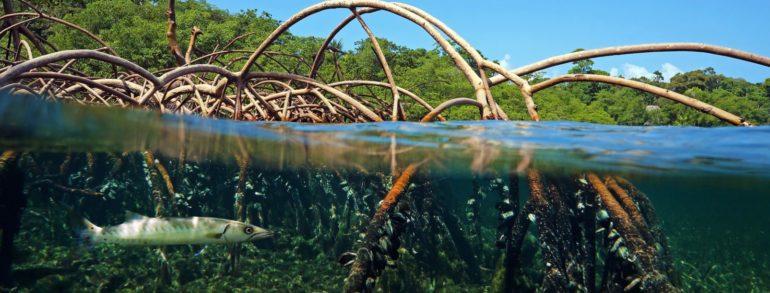 Balade En Guadeloupe dans la Mangrove à Sainte Rose, pour une journée découverte