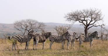 L'Afrique du Sud, une excellente destination pour se divertir